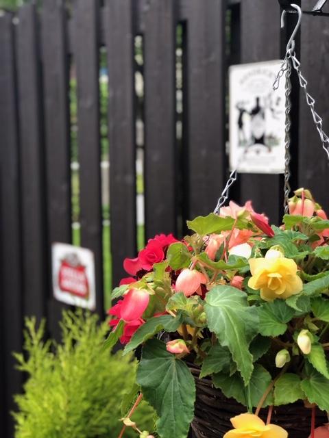 refurbished beer garden hanging baskets at the strathaven bar in strathaven