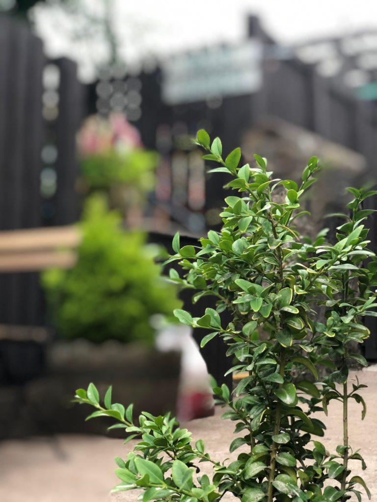 refurbished beer garden planting at the strathaven bar in strathaven