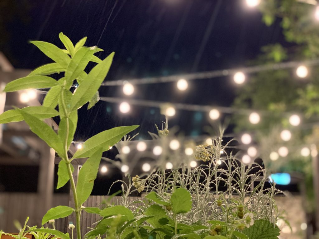 refurbished beer garden flowers and lights at the strathaven bar in strathaven