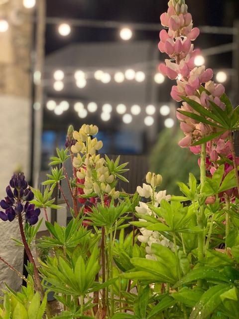 refurbished beer garden flowers at the strathaven bar in strathaven